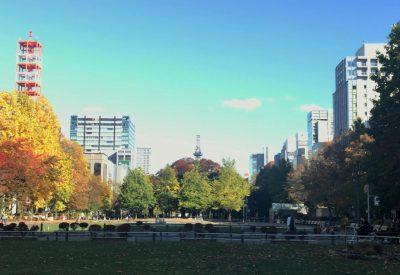 大通公園から望むテレビ塔